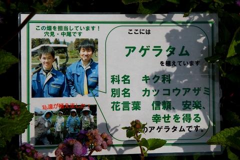 くじょう花公園-4