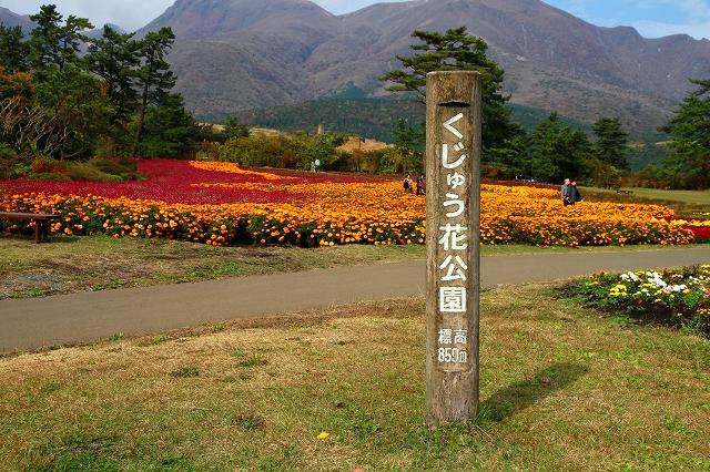くじゅう花公園-1