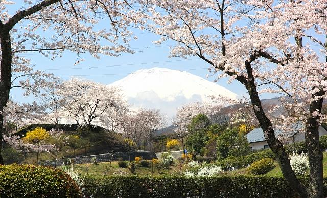 冨士霊園-9