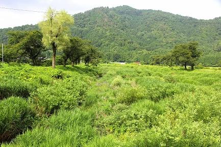 緑豊かな風景