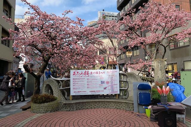 あたみ桜-8