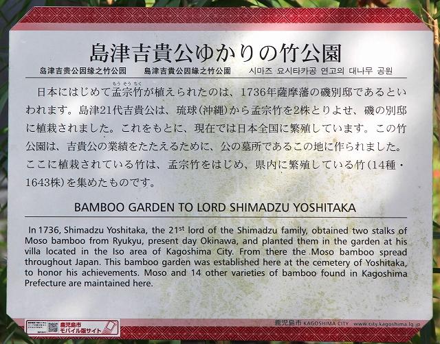 竹公園-2