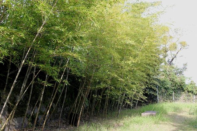 竹公園-3