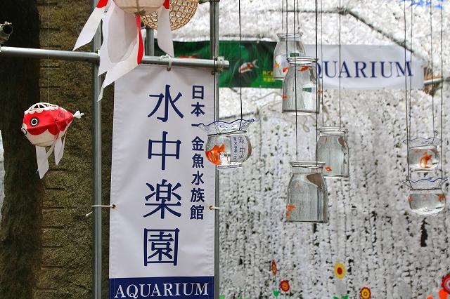 金魚水族館-2