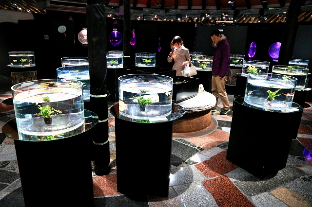 金魚水族館-4