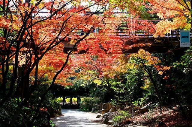 京都・梅小路公園-1