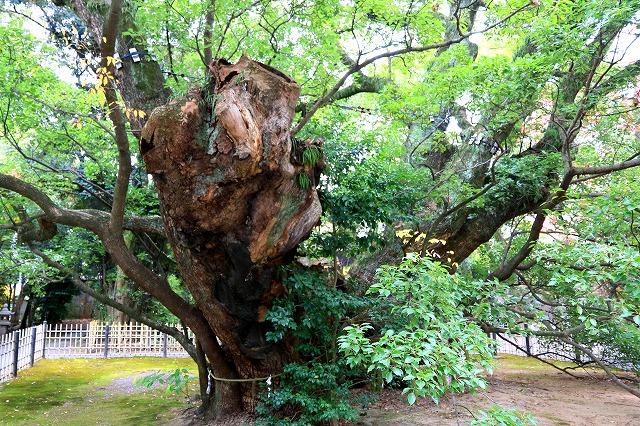 浜松八幡宮-7