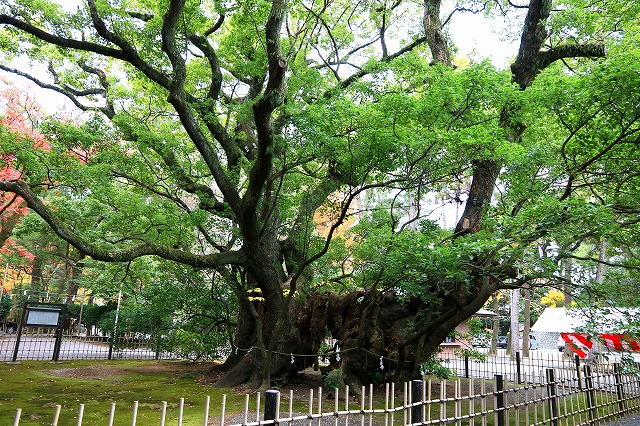 浜松八幡宮-10