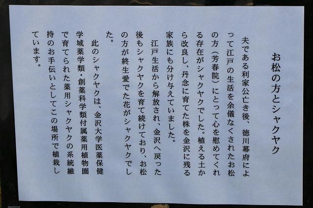 尾山神社-10
