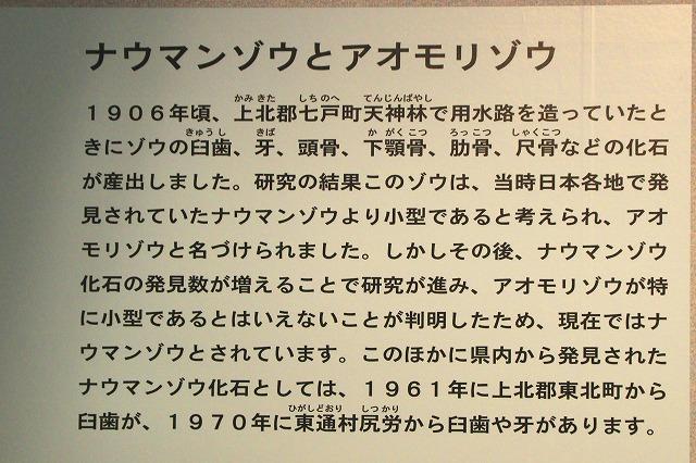 県立郷土館-5