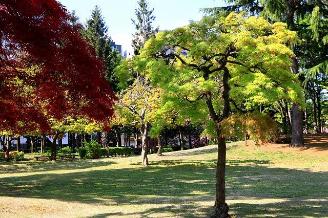 青い森公園-13