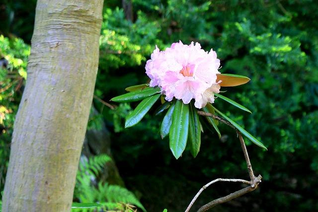 藤田記念庭園-8