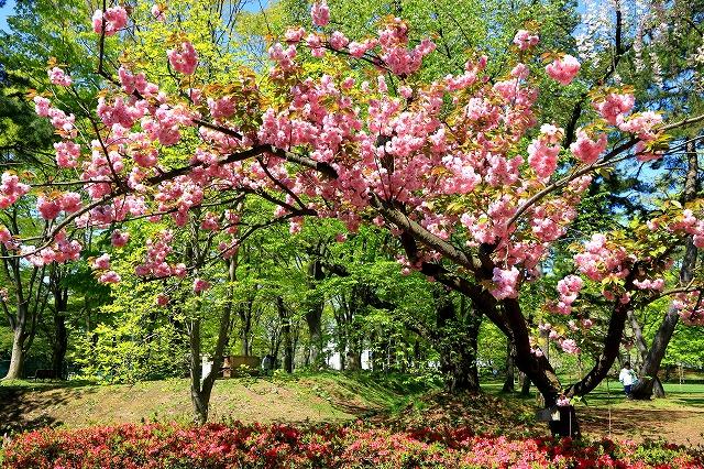 弘前公園-9