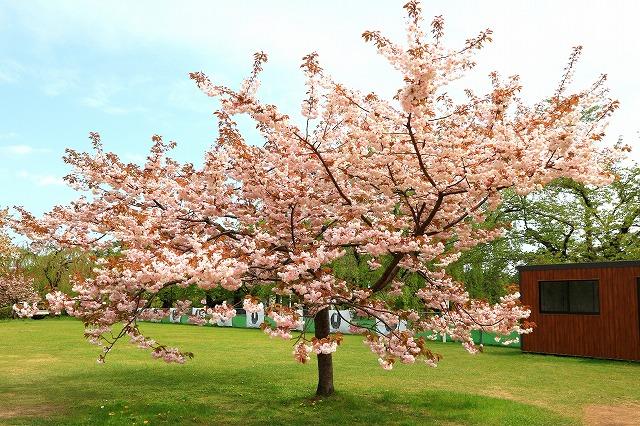 弘前公園-8