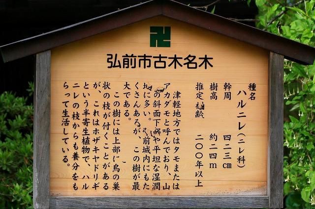 弘前公園-5