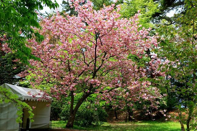 弘前公園-6