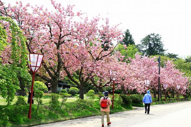 弘前公園-16