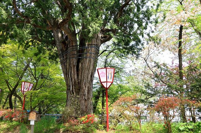 弘前公園-10