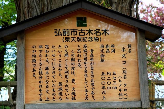 弘前公園-11