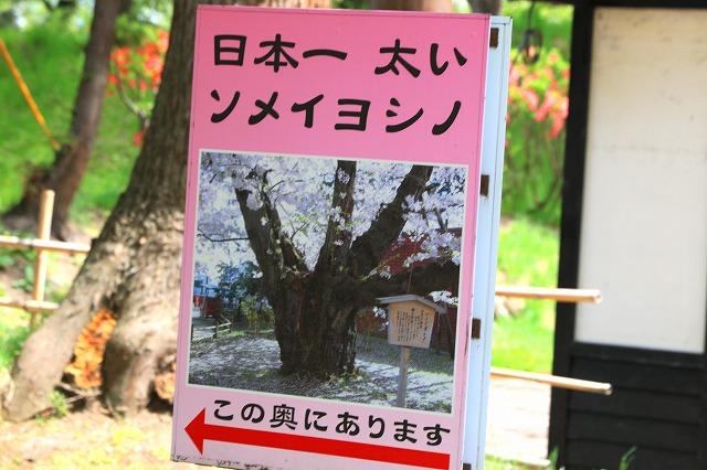 弘前公園-13