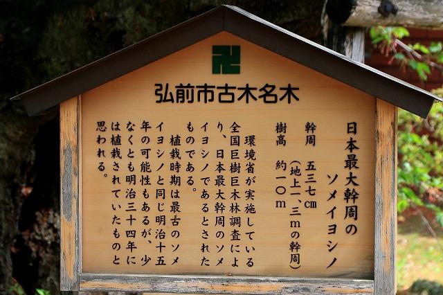 弘前公園-15