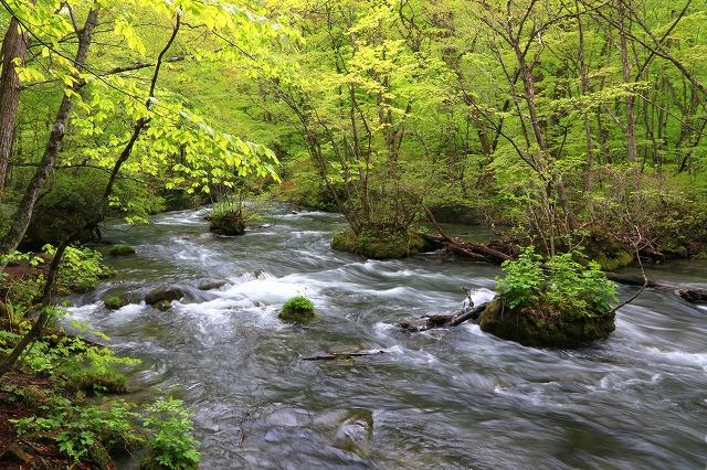 奥入瀬渓流-2