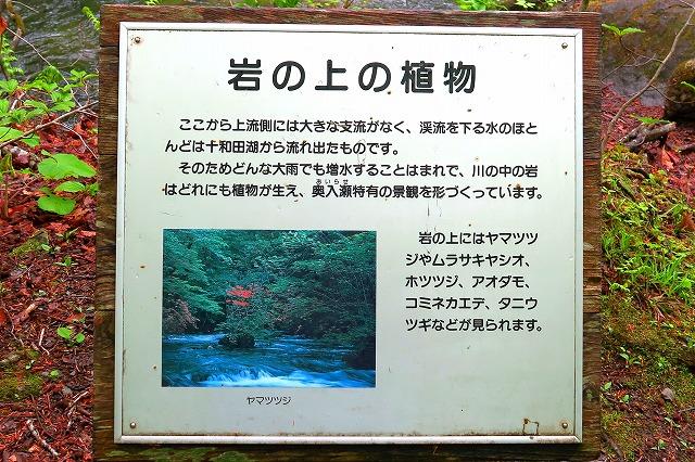 奥入瀬渓流-8
