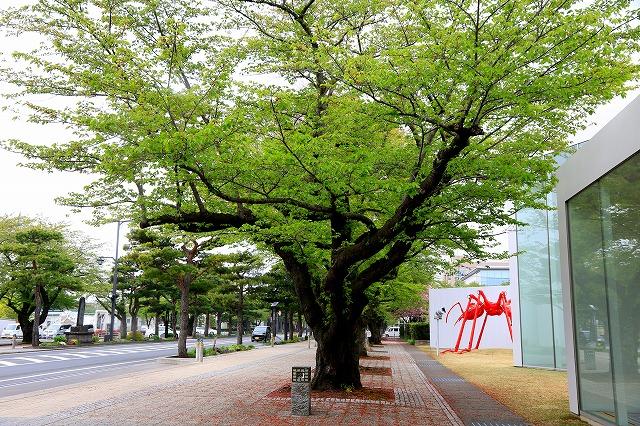 十和田市-1