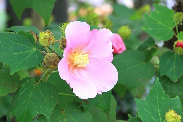 道端に咲く花-2