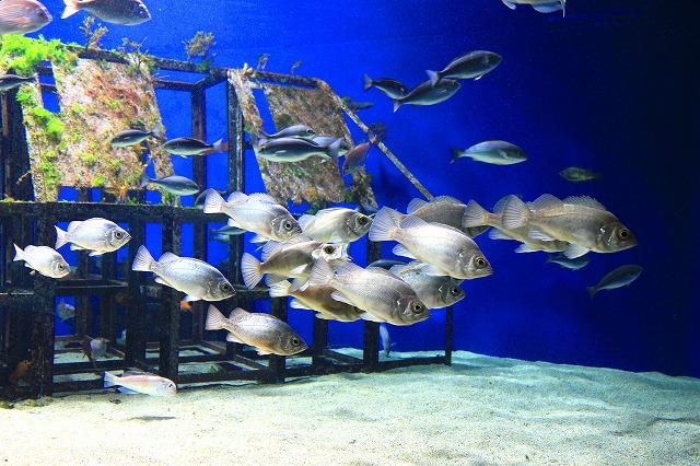 優雅に泳ぐ魚たち