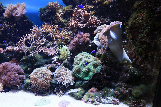 サンゴ-1