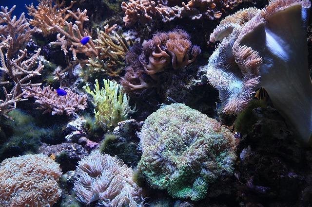 サンゴ-3