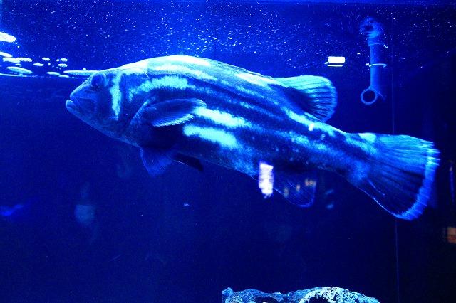 深海水族館-14