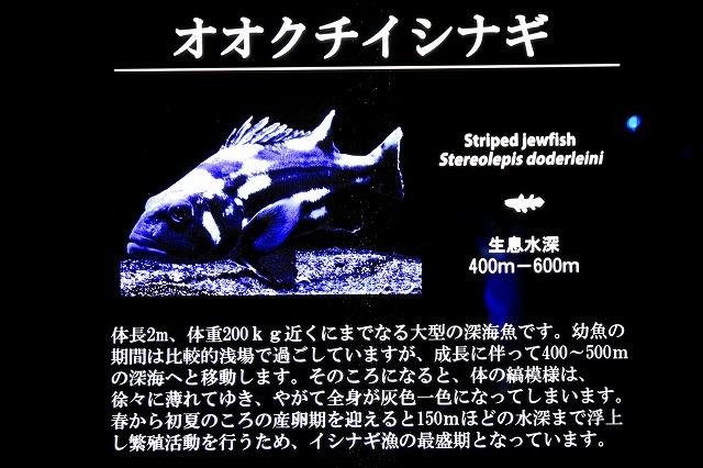 深海水族館-15