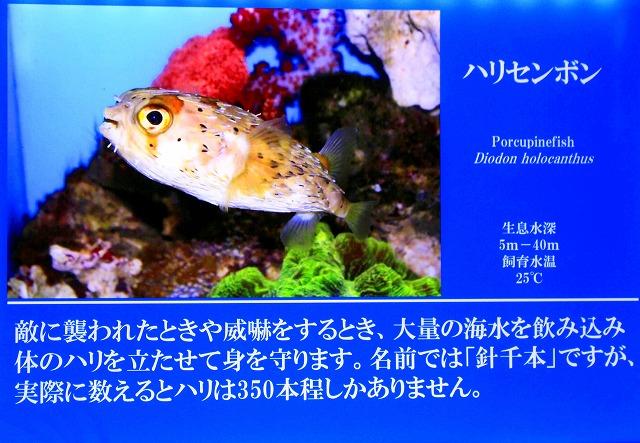 深海水族館-21