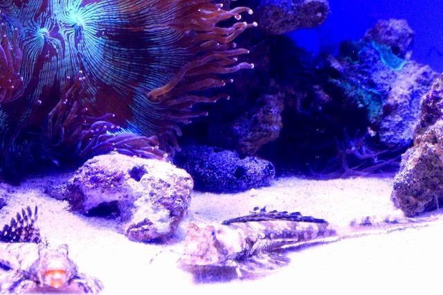 深海水族館-22