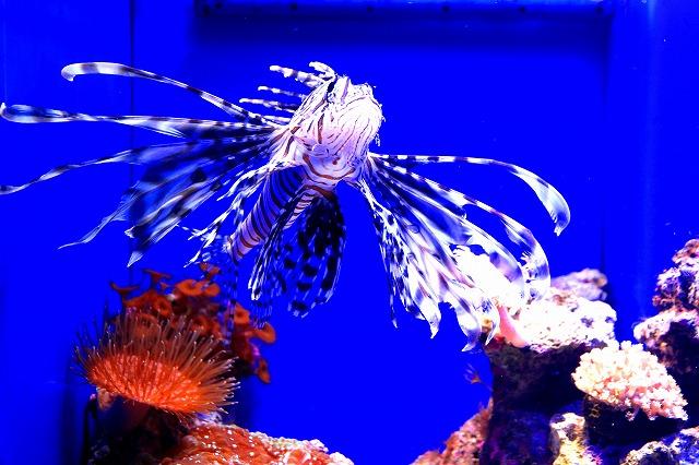 深海水族館-24