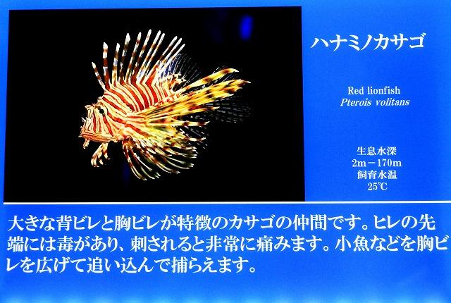 深海水族館-25
