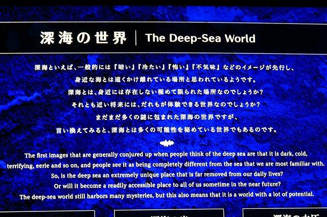 深海水族館-30