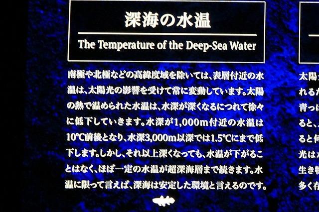 深海水族館-31