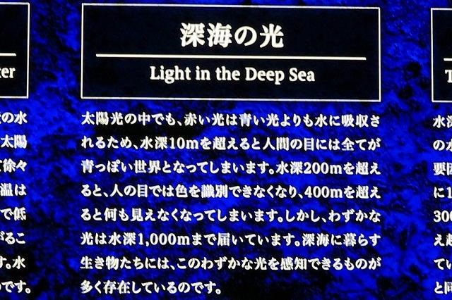 深海水族館-32