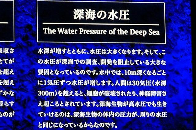 深海水族館-33
