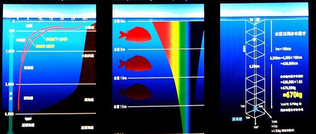 深海水族館-34