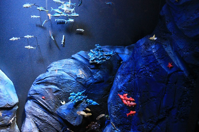 深海水族館-36