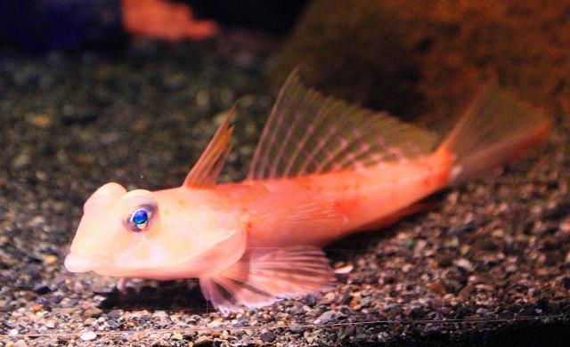 深海水族館-38