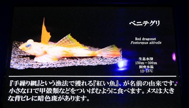 深海水族館-39