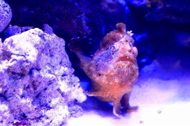深海水族館-40