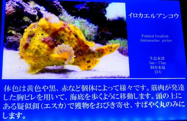 深海水族館-41