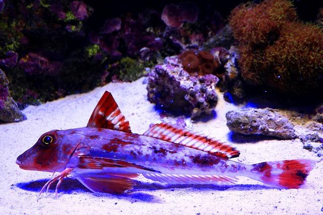 深海水族館-42