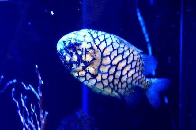深海水族館-46